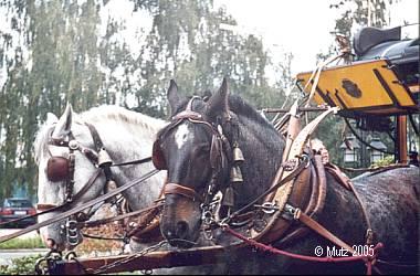 post kutsche pferdeomnibus