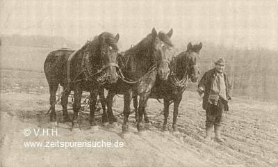 pferd einfahren dauer